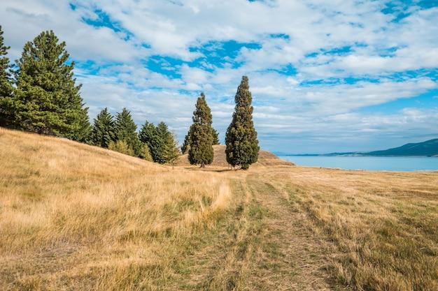Landscape of pukaki lake