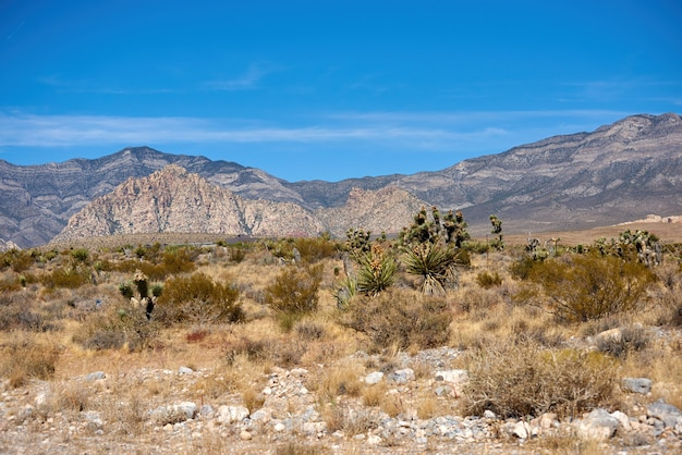 Landscape in red rock canyon, nevada, usa