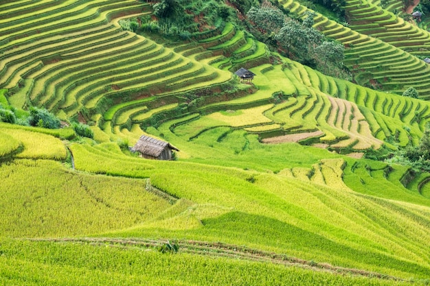 Landscape of rice field on terraced with tribe cottage landmark of mu cang chai