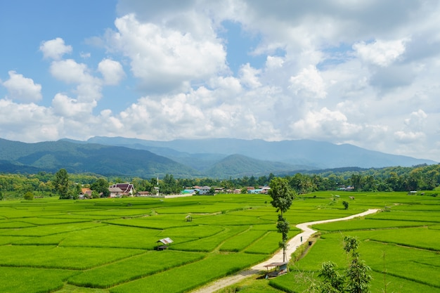 Landscape of rice fields in nan province