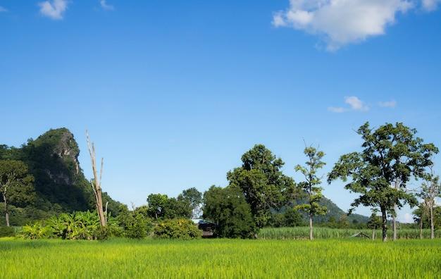 구름과 푸른 하늘 배경으로 나무의 풍경 쌀