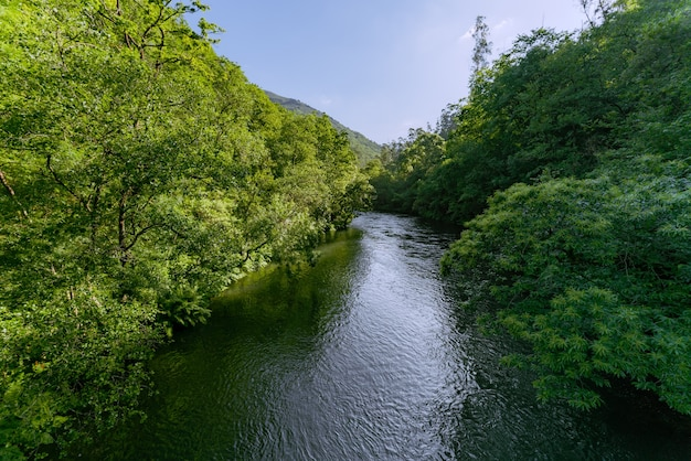 Landscape river in forest atlantic forest well preserved fragas do eume galicia spain