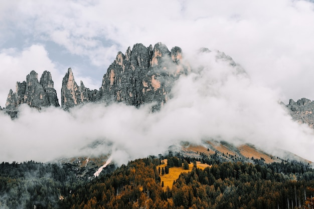 Landscape of rocks surrounded by forests covered in the fog under a cloudy sky