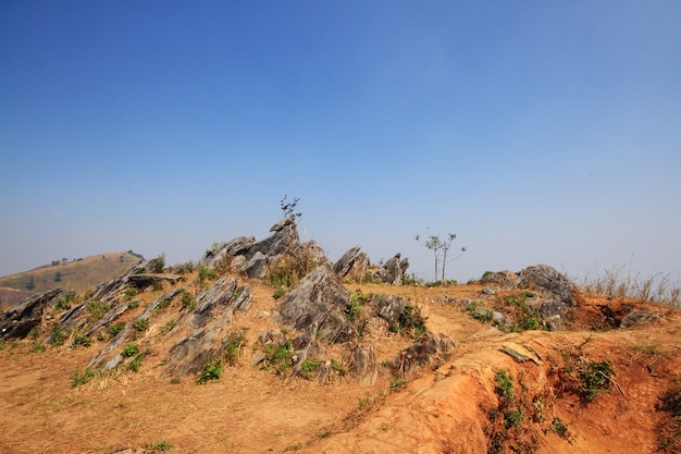 Landscape of the rocky and dry grassland on the valley mountain at doi pha tang hill in thailand