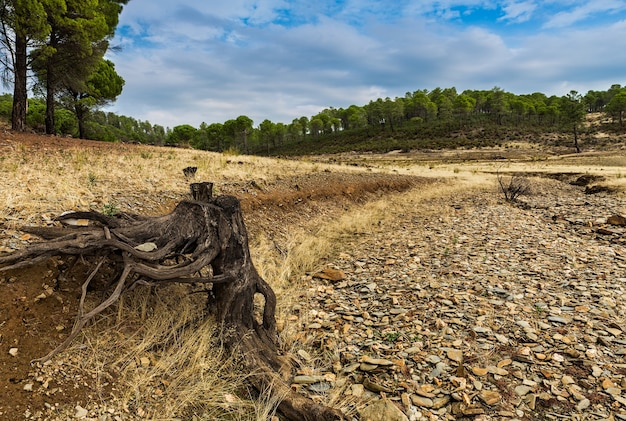 Landscape of roots in the dry creek