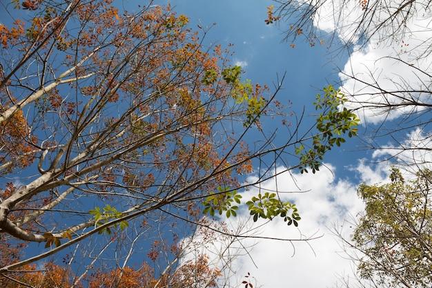 青い空で日中の風景のゴム農園