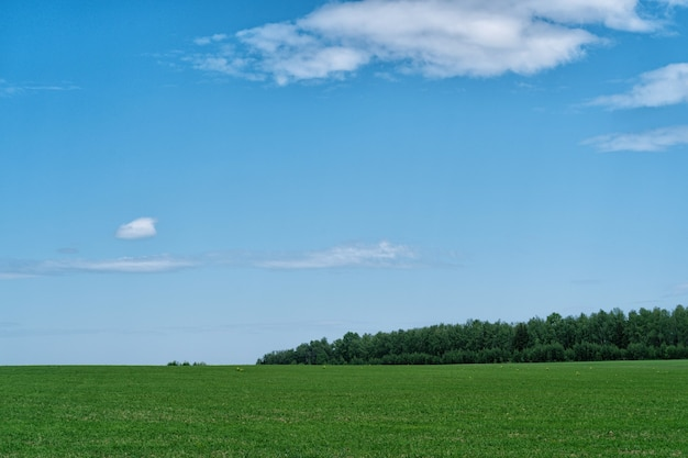 Пейзаж сельская сцена с зеленым полем и голубым небом и sloudscape.