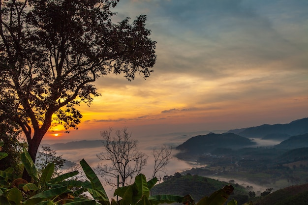 Landscape sea of mist on mekong river in border of thailand and laos.