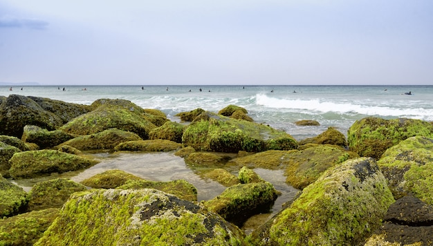 Landscape of a shore covered in stones and mosses surrounded by the sea with surfers on it