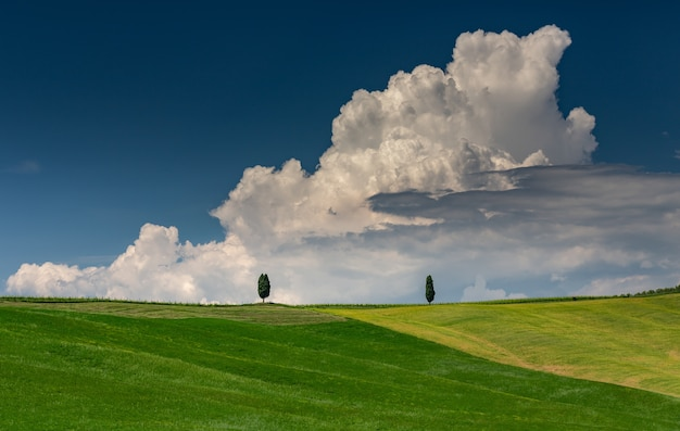 Landscape shot of a green hill with two green trees in val d'orcia tuscany italy