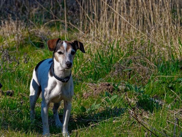 Пейзажный снимок собаки