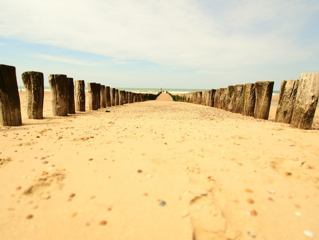Пейзажный снимок песчаного пляжа с деревянным волнорезом