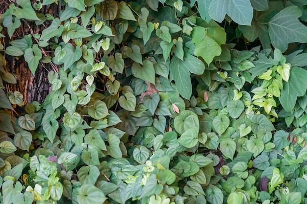 태양 아래 활기찬 녹색 식물의 풍경 샷