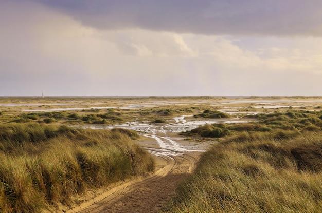 Пейзажный снимок, сделанный в дюнах амрум, германия, в солнечный день.
