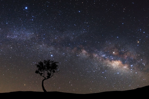 Landscape silhouette of tree with milky way galaxy and space dust in the universe