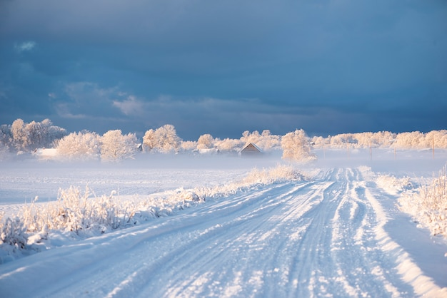 Landscape of snowy winter morning in krimulda,latvia