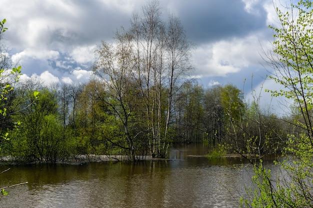 風景-高水時に氾濫した春の森