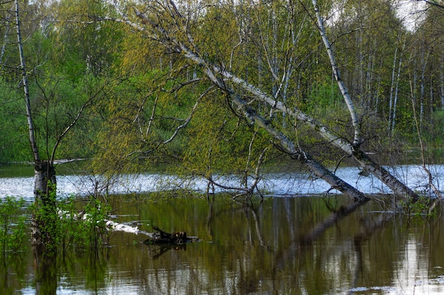 風景-高水時に氾濫した木の春の木立