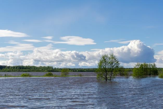 風景-高水時の春の川