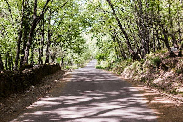 Landscape of straight road under the trees. sunny weather. nobody. travel concept