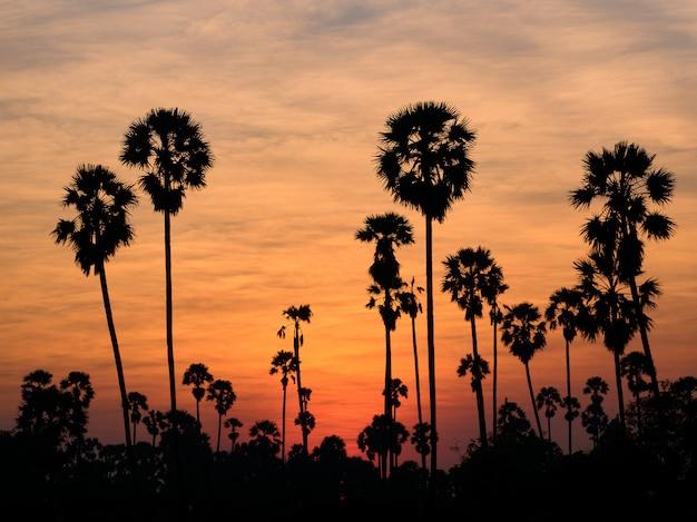 Пейзаж сахарной пальмы в таиланде
