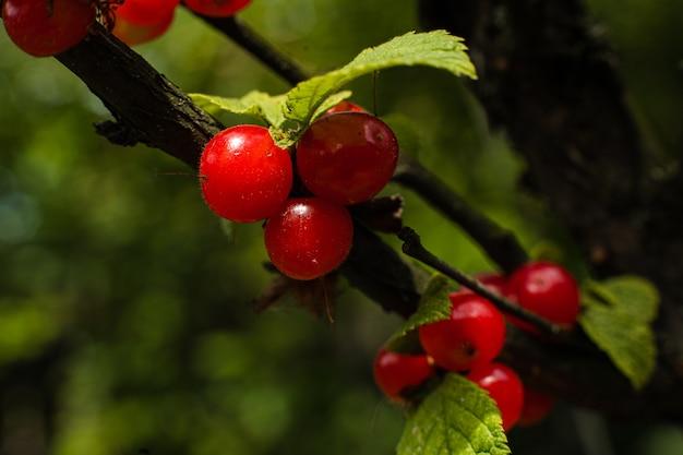 風景の夏の収穫、熟した森の果実、背景をぼかす