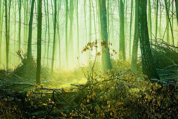 風景-秋の厚い森の晴れた日