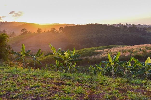 バナナ畑と草の牧草地の美しい空と山の風景の日の出または日没