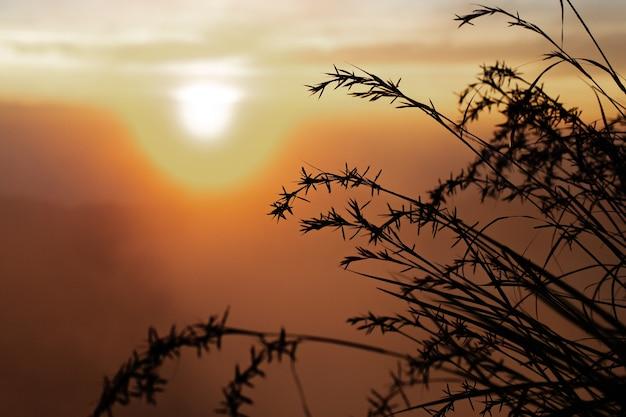 경치. 햇빛에 키 큰 잔디. 화산 바 투르. 발리 인도네시아