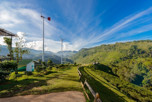 Landscape of  tea plantation 2000 at doi ang khang
