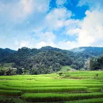 일출 풍경 테라스 녹색 쌀 필드