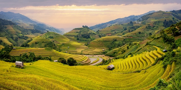 Landscape terraced rice field near sapa, north vietnam