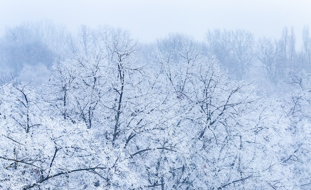 Landscape of tree branches covered in frost during the winter in zagreb in croatia