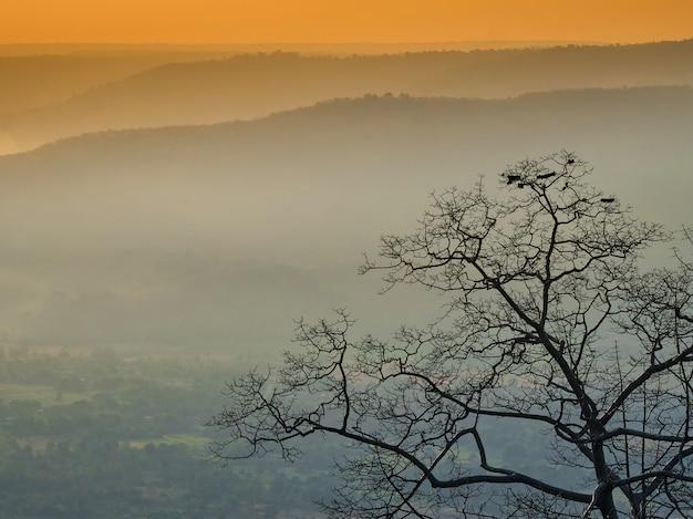 Пейзажное дерево утром