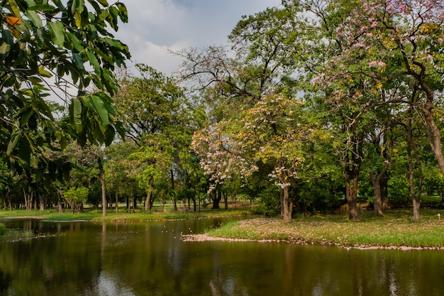Landscape of tree in the park