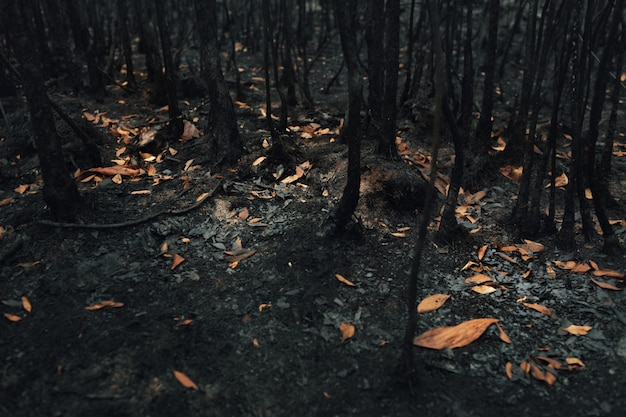 Landscape of trees and bushes burned by wildfire in tropical rainforest .global warming./ecology concept