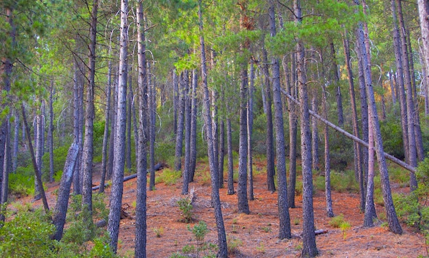 Landscape of trees, forest and nature in taberrant el hociema morocco. maroc