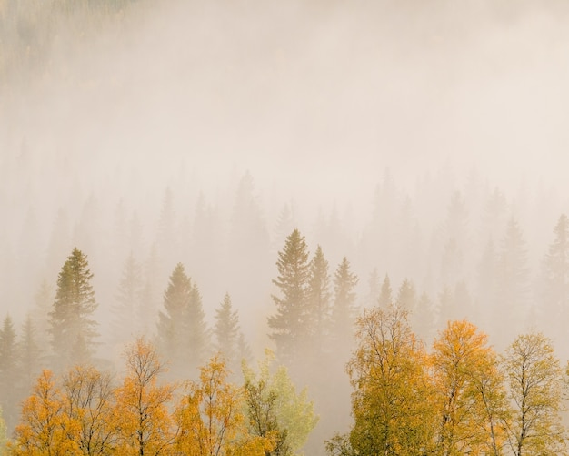 Landscape of trees with colorful leaves in a forest covered in fog