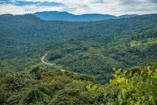 Landscape of tropical rain forest in borneo, sarawak