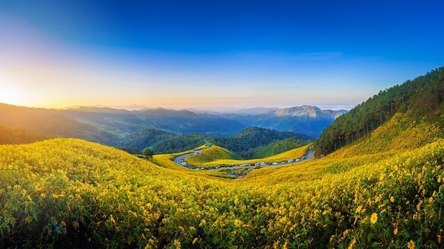 Пейзаж «тунг буа тонг» или мексиканское подсолнечное поле в восходящем небе