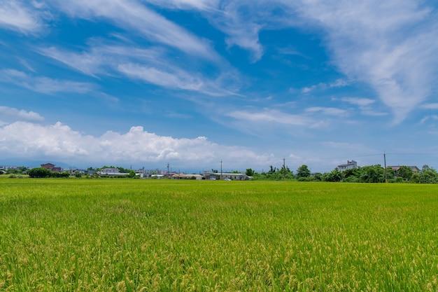 Landscape view of beautiful rice fields