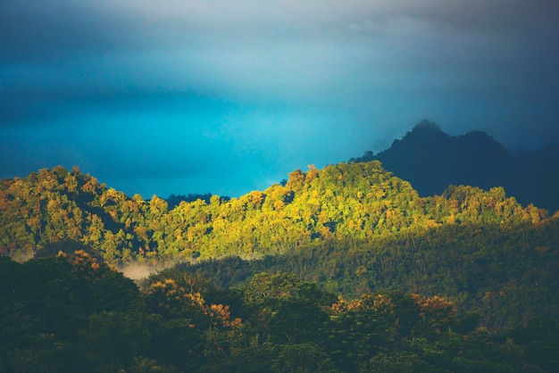 Landscape view of forest in thailand, tropical forest