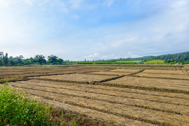 Landscape view of a freshly growing agriculture vegetable