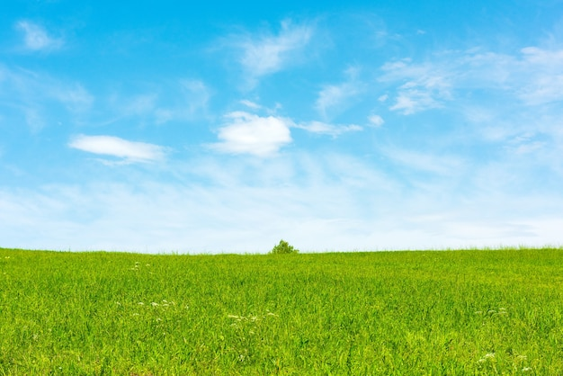 Landscape view of green grass on field with blue sky and clouds background