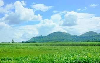 Landscape view of agricultural fields with mountain background and blue sky.