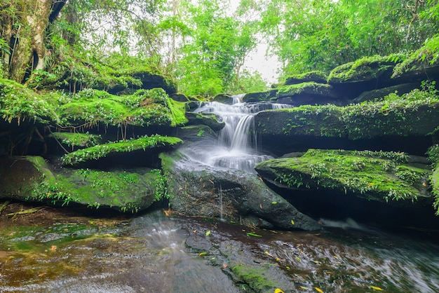 Landscape of waterfall in deep rain forest of bolaven plateau, champasak with green moss