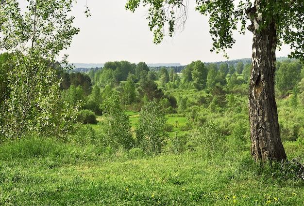 Landscape of western siberia in spring