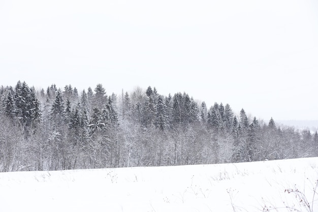 Landscape in the winter cloudy day of snow-covered fields and forests