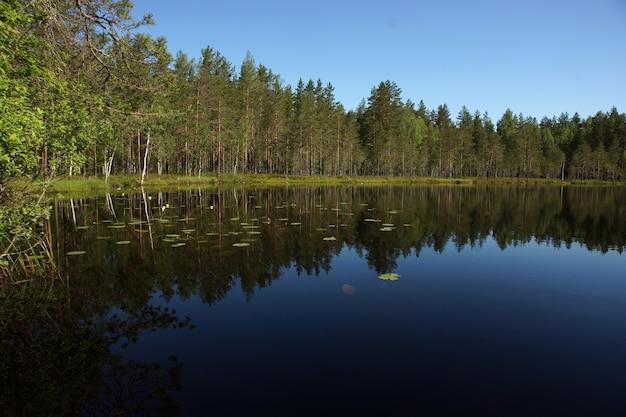 Пейзаж с голубым озером и отражающимся лесом на берегу.