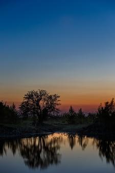 日没後の湖の上の木の風景。